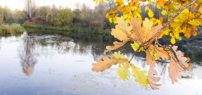007355538_Tree-with-autumn-leaves-on-a-background-of-lake